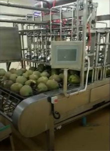 Coconut Processing Machine